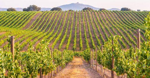 Innovation and Partnerships Make Wine Tourism Driver Rural Development